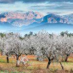 Imbolc, la Candelaria y la siembra de la semilla de propósito